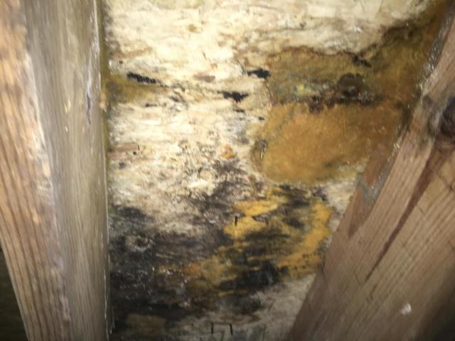 Damaged Sub-Floor in Crawl Space